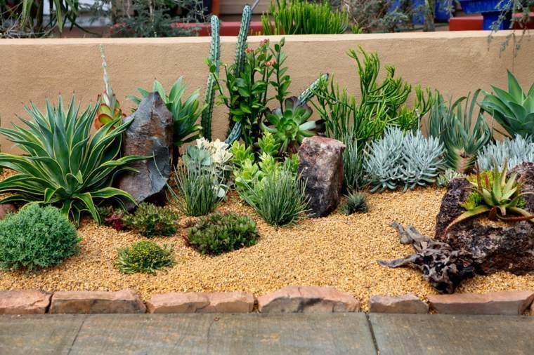 cactus en macetas decorar casa