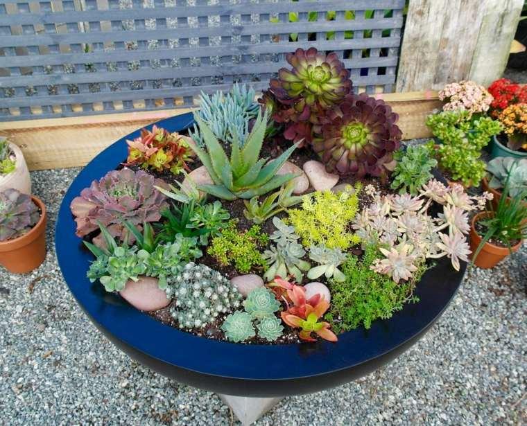 cactus en macetas decorar