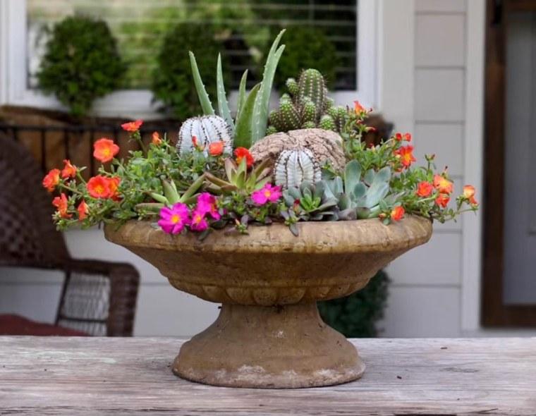 cactus para jardin decorar casa