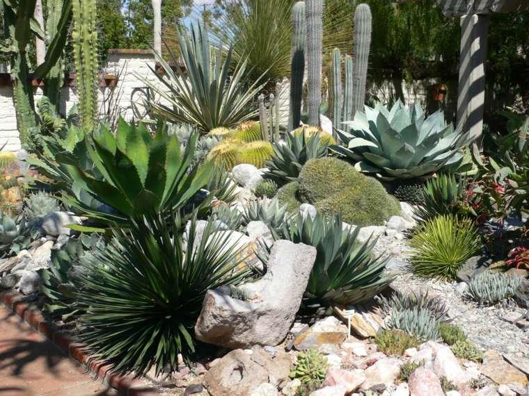 cactus para jardin decorar