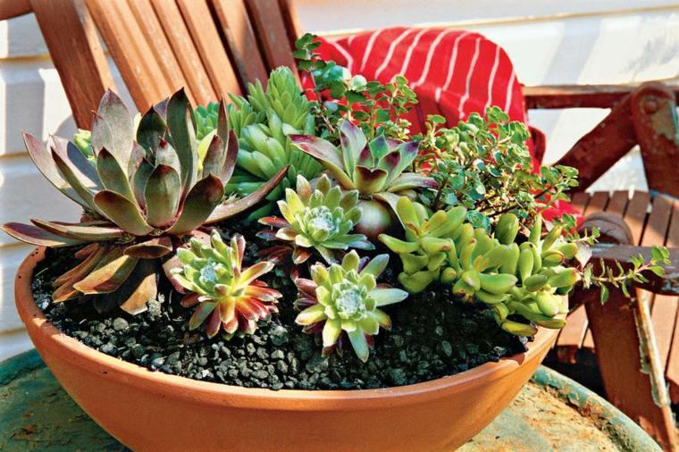 cactus pequeños decorar casa