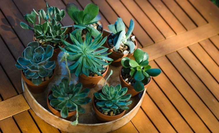 centos de cactus decorar