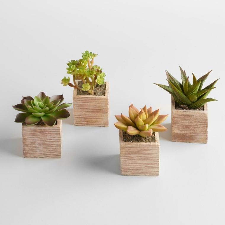 decoracion con cactus interior casas