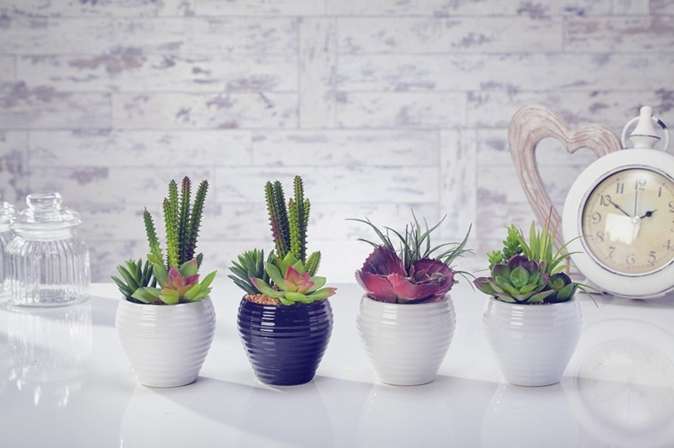 decoracion con cactus interior