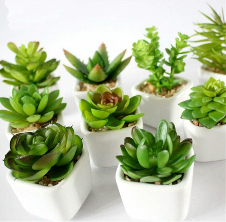 decoracion con cactus moderna interior