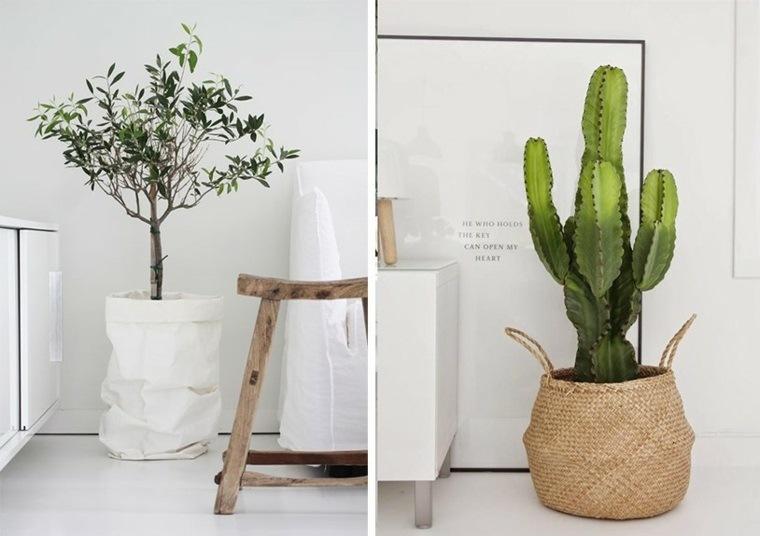 decoracion con cactus moderna interiores