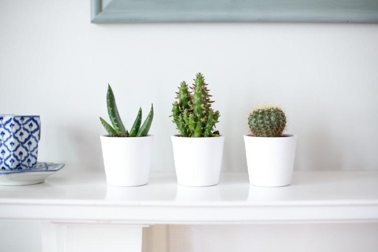 decoracion con cactus modernos