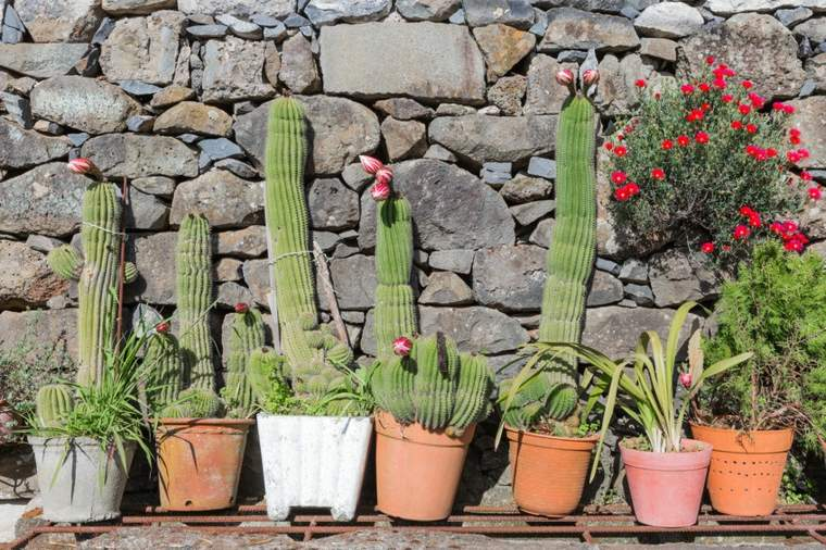 decoracion con cactus pared