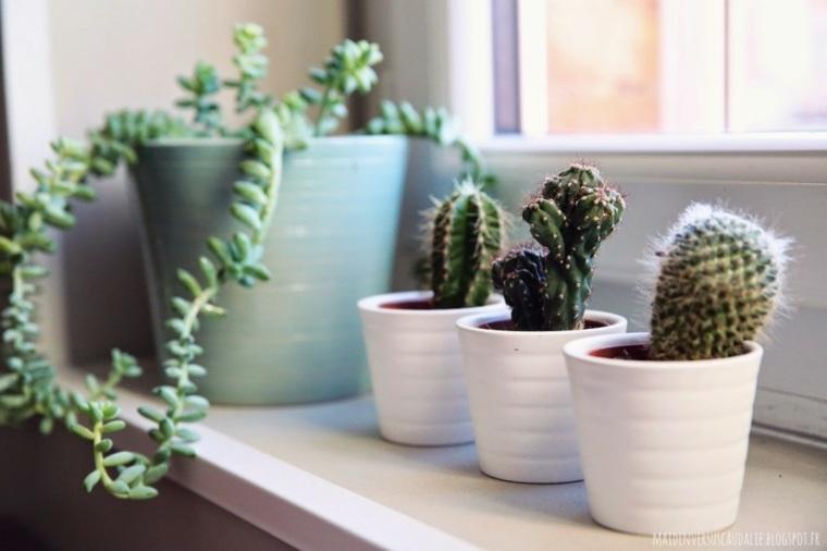 decoracion con cactus salon