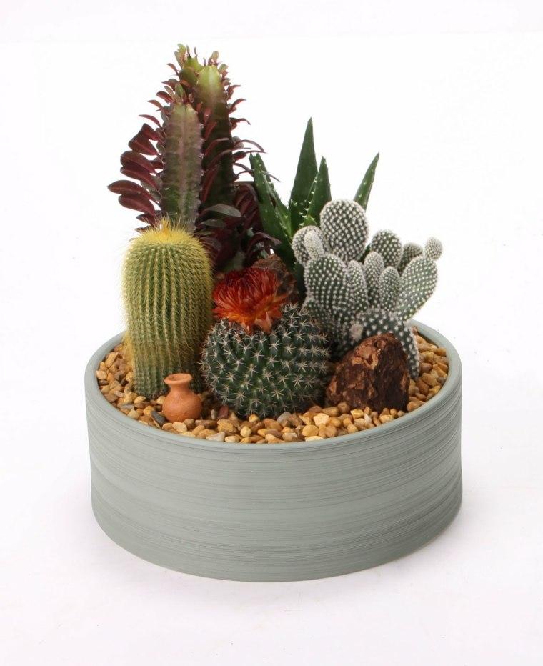 decoracion con cactus salones