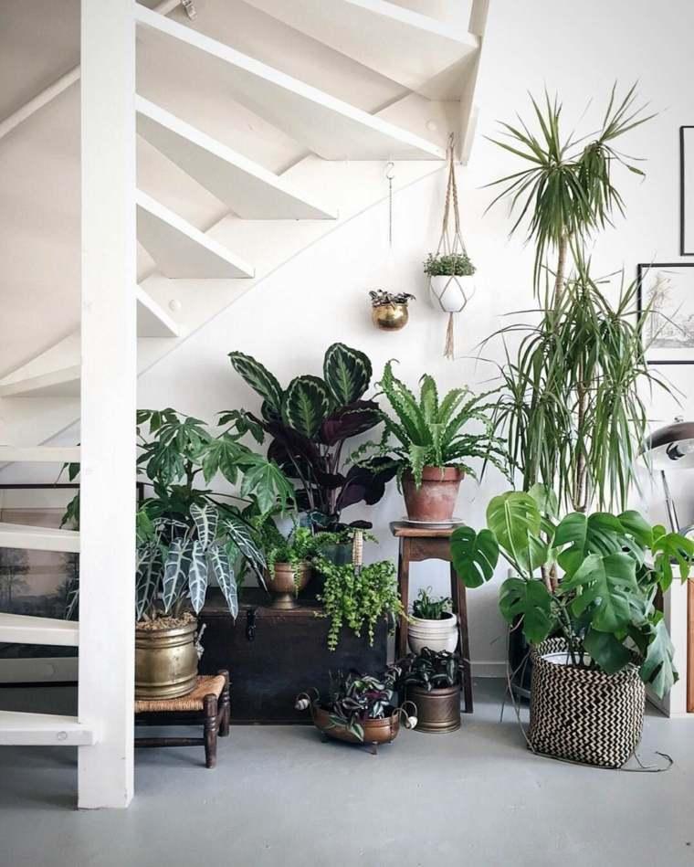 hueco plantas