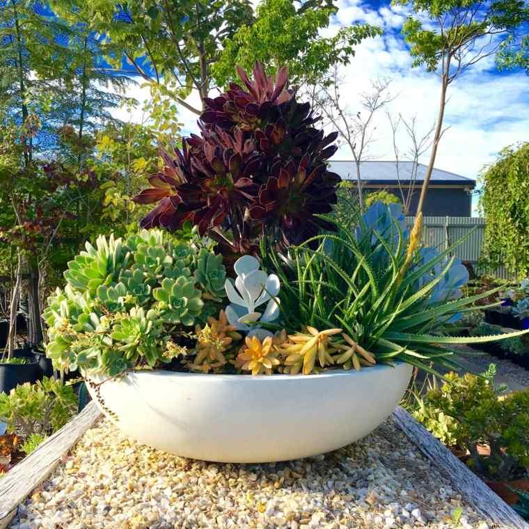 macetas cactus decorar casa