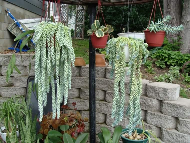 macetas con cactus casa