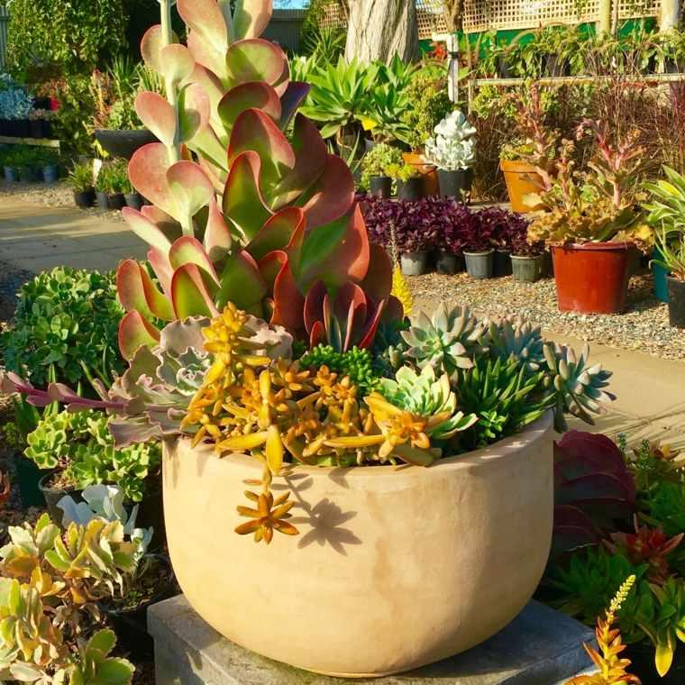 Decoraci n con cactus para el interior y el exterior de casa for Macetas grandes para jardin