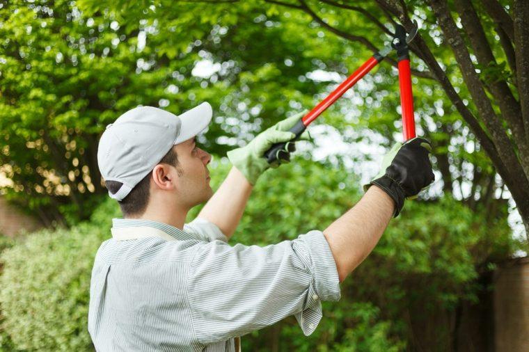 mantenimiento de jardines altos-arboles-conceptos-piezas