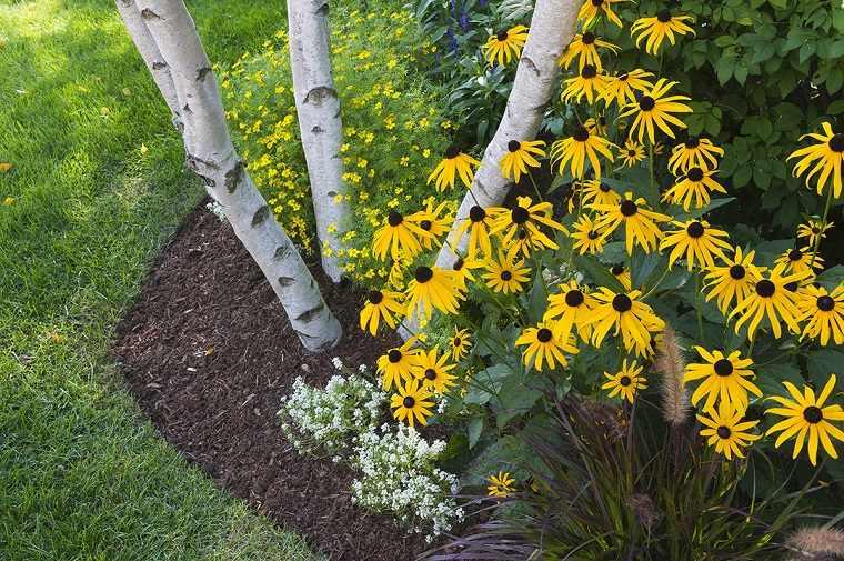 mantenimiento-de-jardines-flores-amarillas-campo-creativo