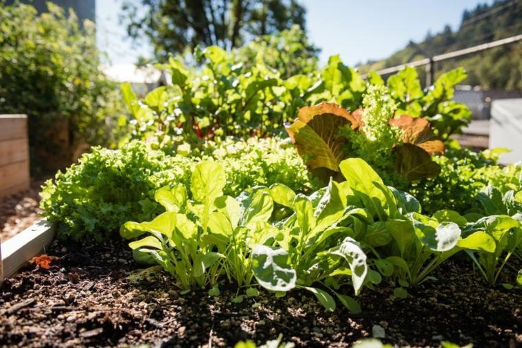 mantenimiento-de-jardines-huerto-hierbas-casas-vegetales