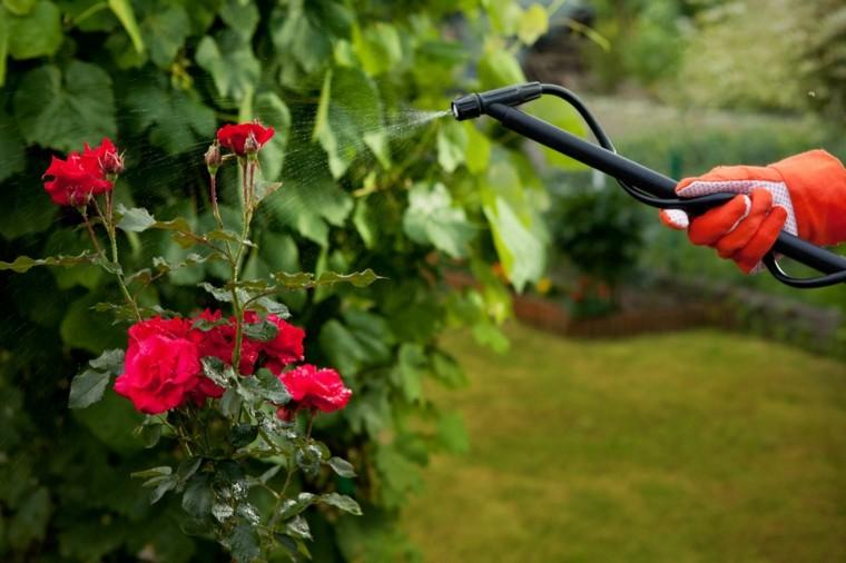 mantenimiento de jardines riego-plagas-rosas-tratamiento