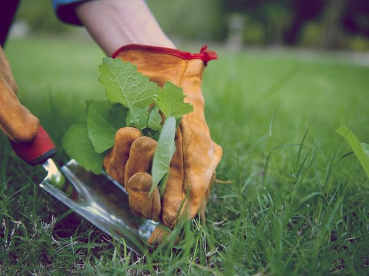 mantenimiento-de-jardines-sacando-malas-hierbas-cuidados