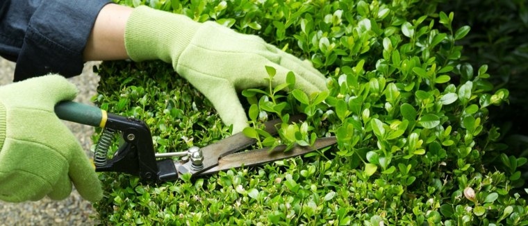 mantenimiento de jardines señales-poda-necesaria-paredes