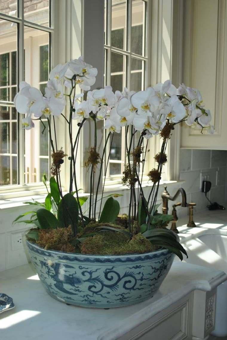 Orqu deas consejos para sus cuidados e ideas de decoraci n - Como cuidar orquideas en maceta ...