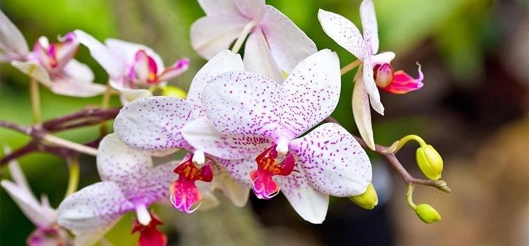orquídeas bonitos colores