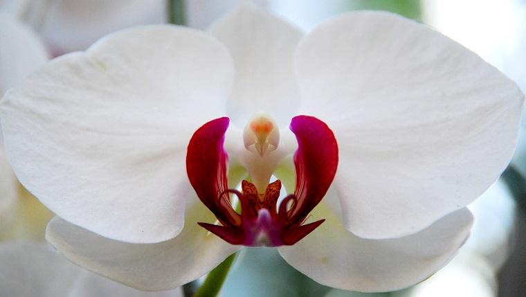 preciosa flor
