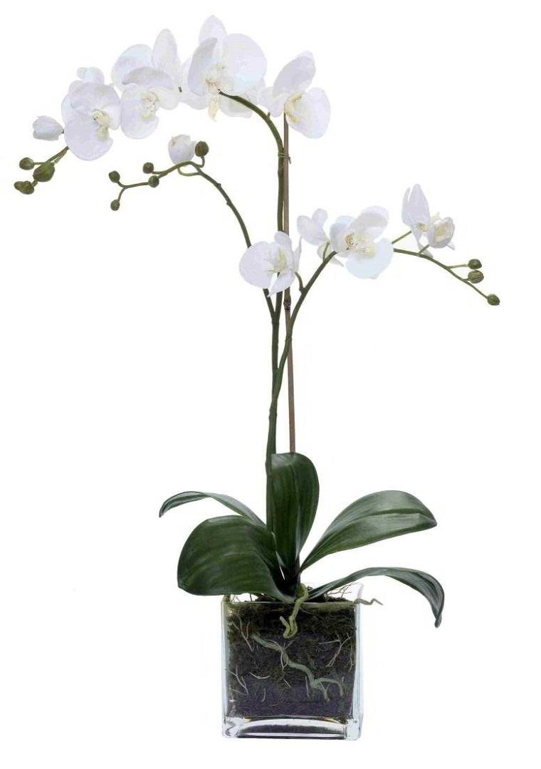 Orquideas Blancas Cuidados Gallery Of Algunas Orqudeas Tambin Se