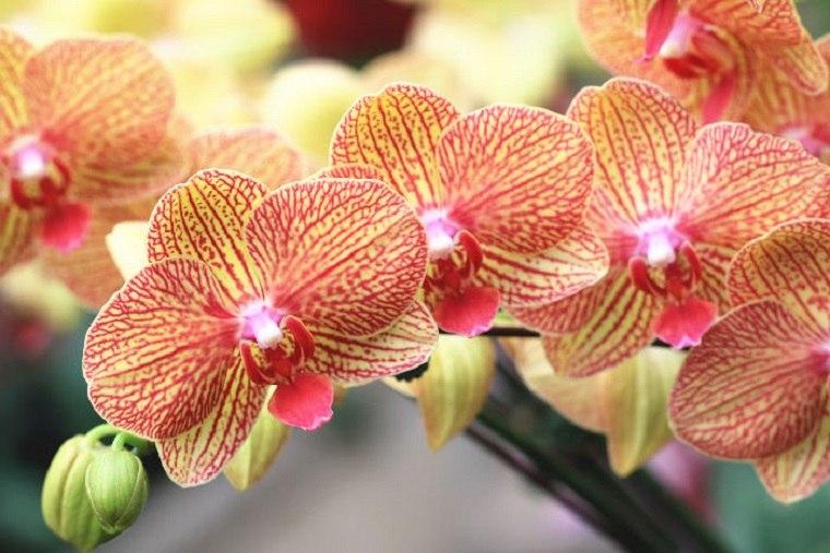 bonitas flores colores
