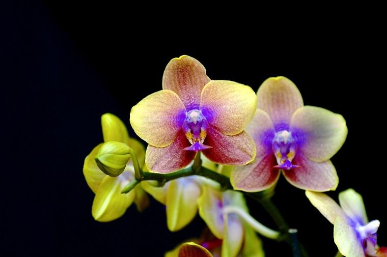 orquídeas colores