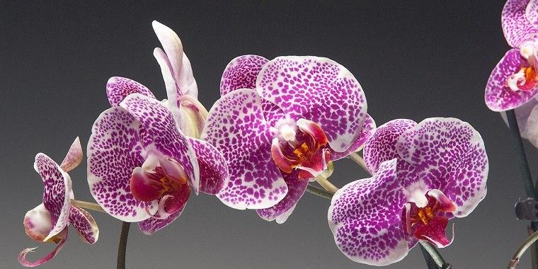 orquídeas impresionantes