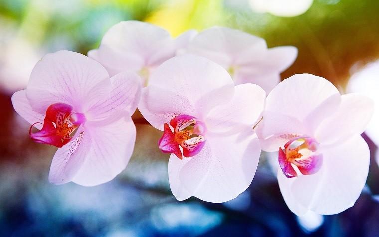orquídeas bonitas