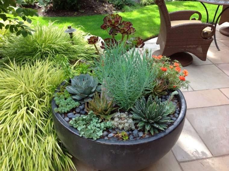 plantas cactus decorar