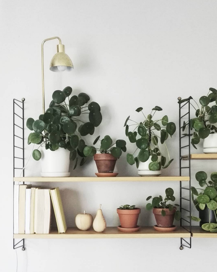 plantas de interior ideas ambientes especiales lamparas