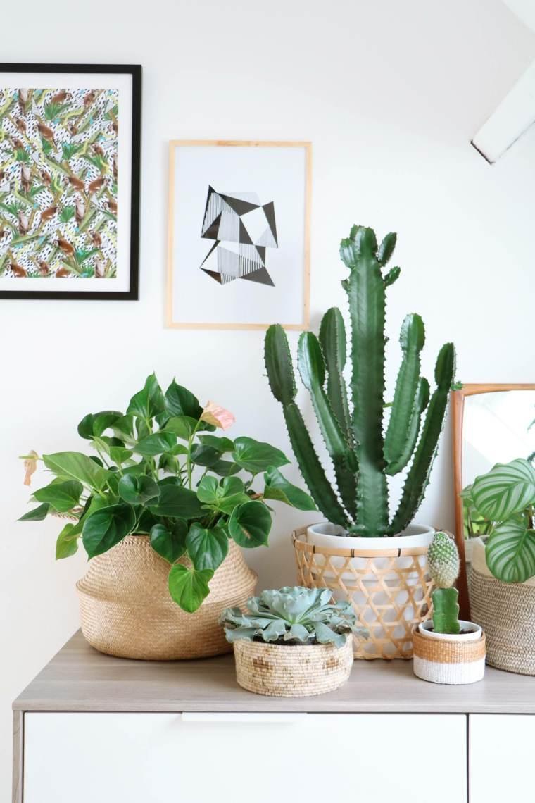 plantas de interior ideas cactus colores cuadros