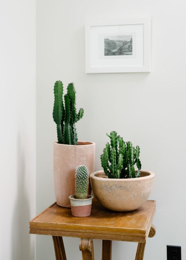 plantas de interior ideas colores cuadros cactus