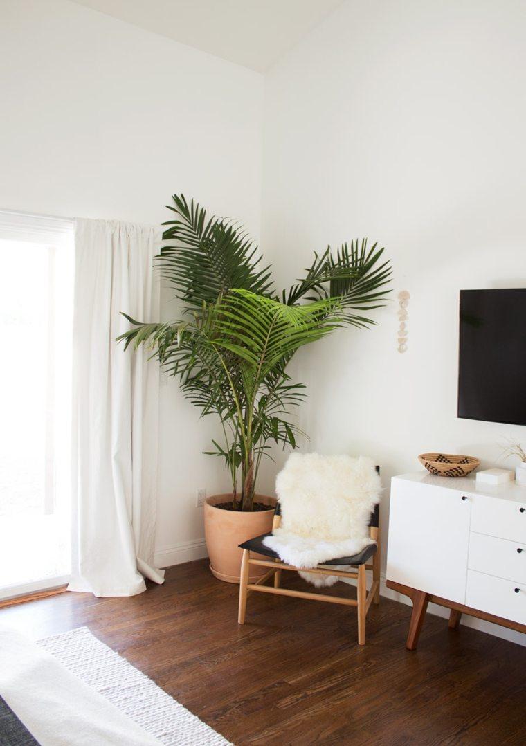 plantas de interior ideas consejos especiales maderas