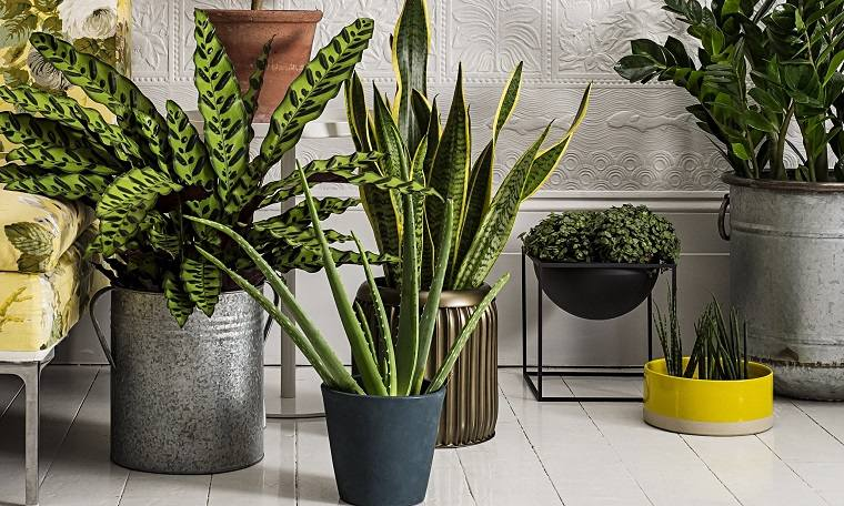 plantas de interior ideas tropicales coloridas muebles