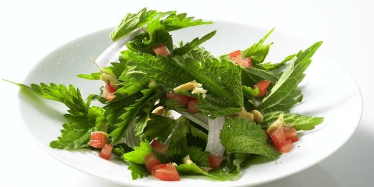 vida saludable ensalada ortiga recetas varias inmune