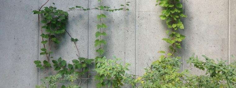 plantas enredaderas