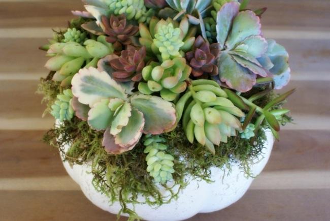 diferentes-plantas-combinacion-calabaza-moderna