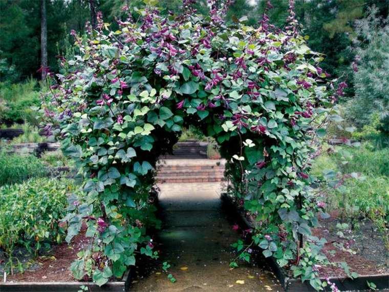 portal flores