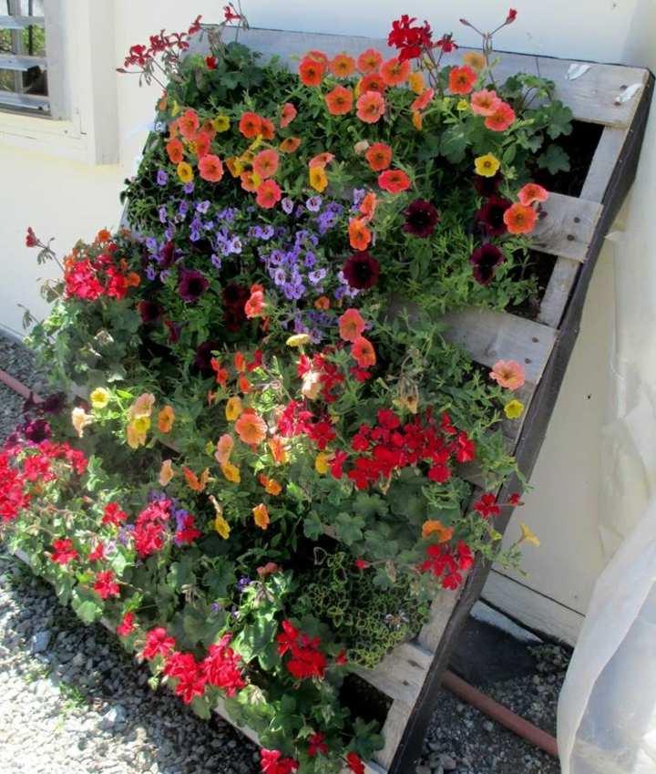 simples-flors-plantadores-elegantes-imagenes