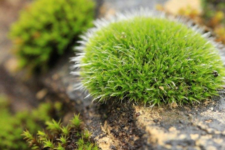 Ideas para decorar un jardin hermoso con piedra y musgo for Jardin meaning
