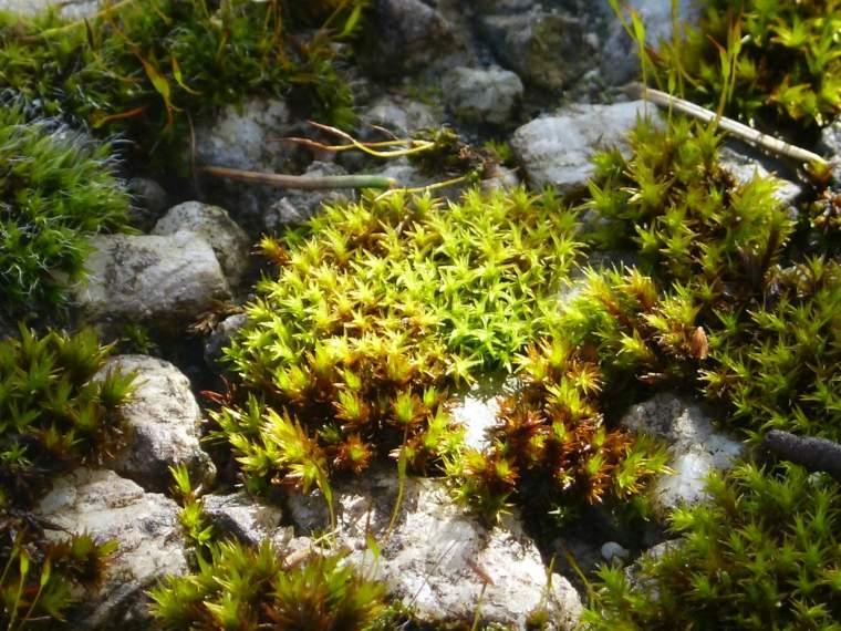 Ideas para decorar un jardin hermoso con piedra y musgo