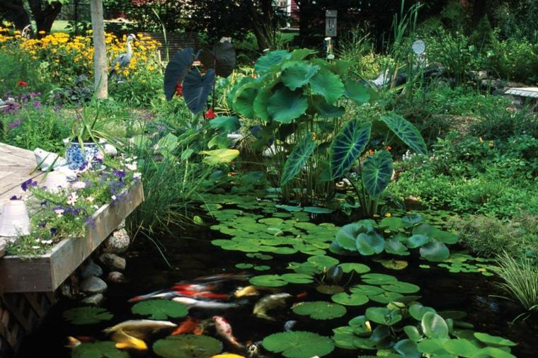 C mo cultivar nen fares en un hermoso estanque de jard n for Como cultivar tilapia en estanques