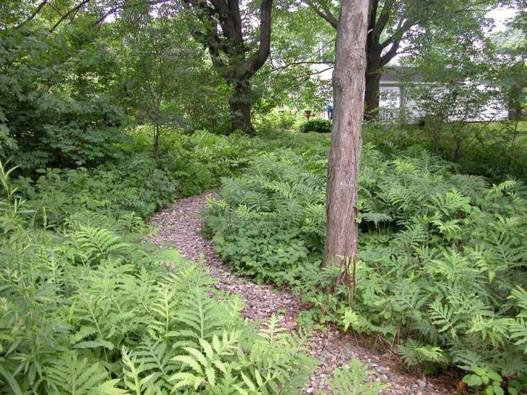 camino-jardin-plantas-arboles-estilo-casa