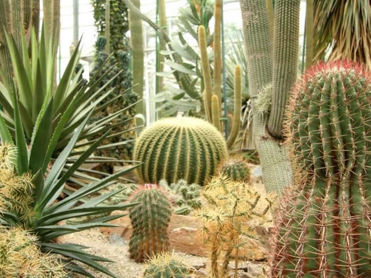 elegantes-imagenes-plantas-cactus