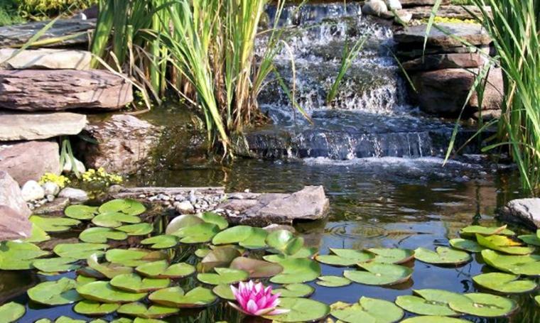 estanque con lirios de agua