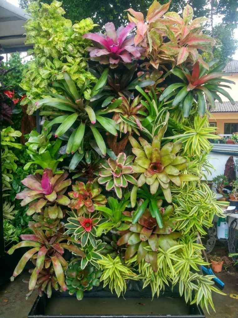 plantas colores